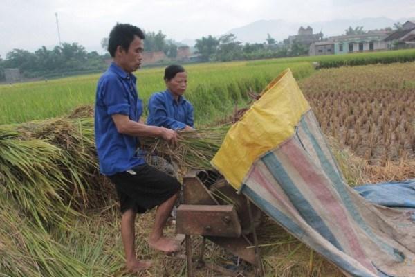 Cấu tạo máy tuốt lúa đạp chân và những ưu điểm của chúng
