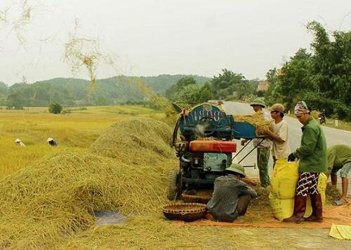 Tìm hiểu cấu tạo và nguyên lý máy tuốt lúa hoạt động như thế nào